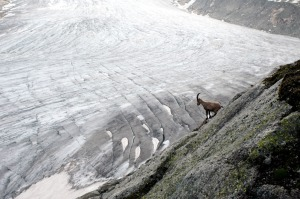 Glaciers suisses Rhône 2007 (wb)a