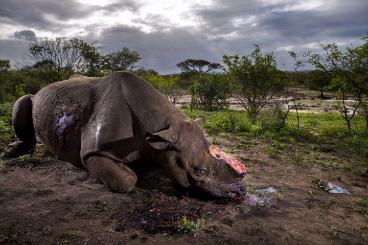 world-press-guerre-rhinos-brent-sirton