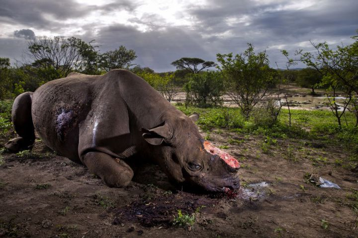 world-press-guerre-rhinos-brent-sirton