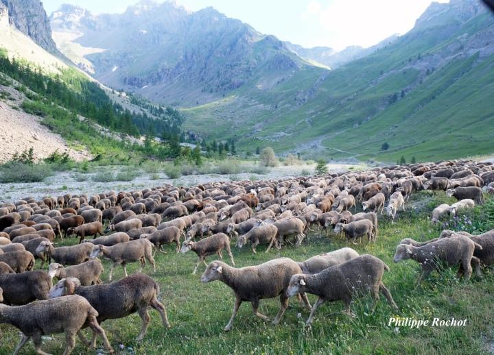 Vallon de l'Eychaud ds troupeaux vulnérables juillet 2018 signé