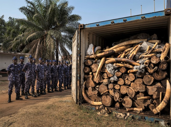 Ivory Wars: How Poaching Funds Terrorism